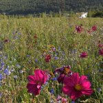 Die Blumenwiese am Bestattungsfriedwald