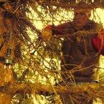 Jürgen schmückt den Weihnachtbaum